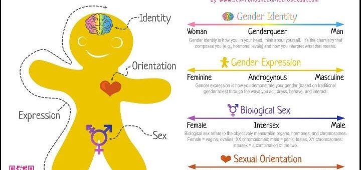 Gingerbread Gender